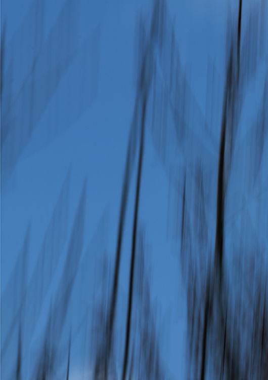 Llangoed Trees 13
