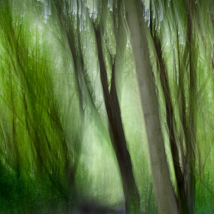 Llangoed Trees 16