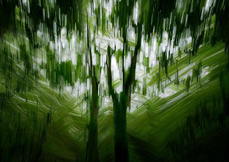 Llangoed Trees 17