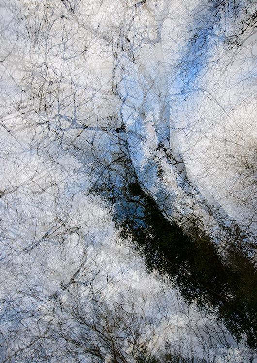 Llangoed Trees 5