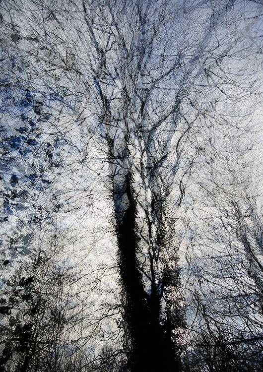 Llangoed Trees 6