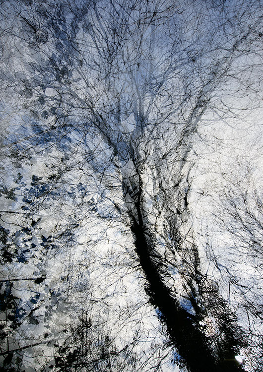 Llangoed Trees 7