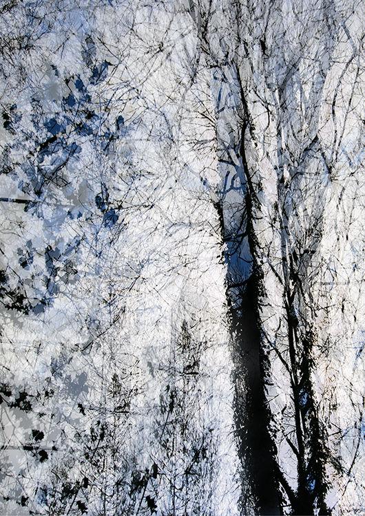 Llangoed Trees 8