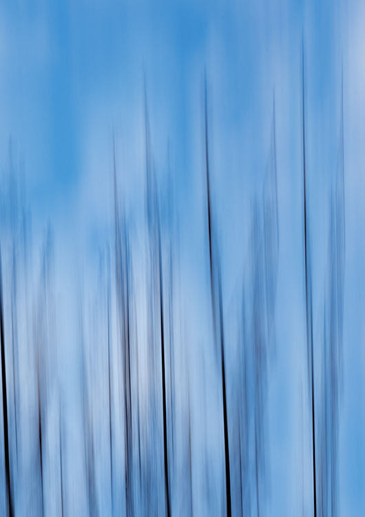 Llangoed Trees 9
