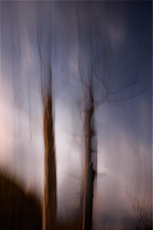 Llyn Dinas Trees