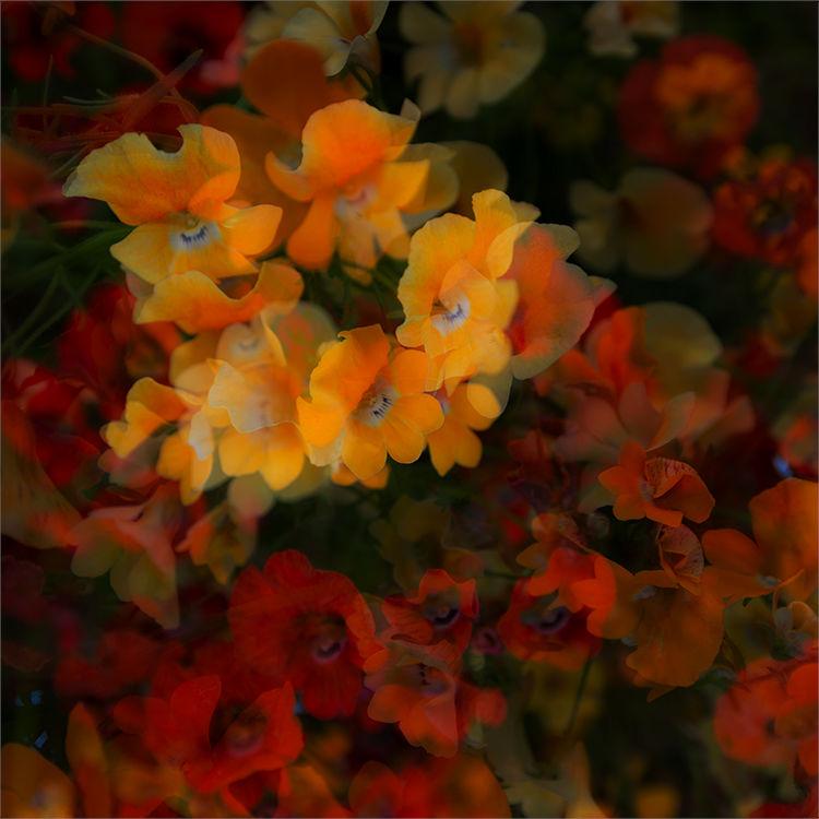 Multi Flowers 09