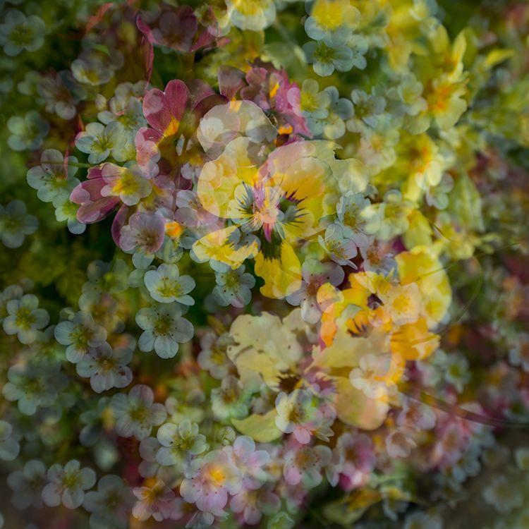 Multi Flowers 11