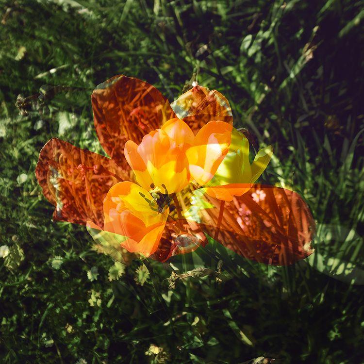 Multi Flowers 12