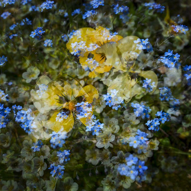 Multi Flowers 01