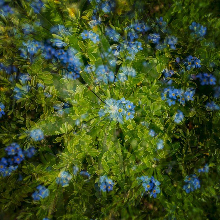 Multi Flowers 14