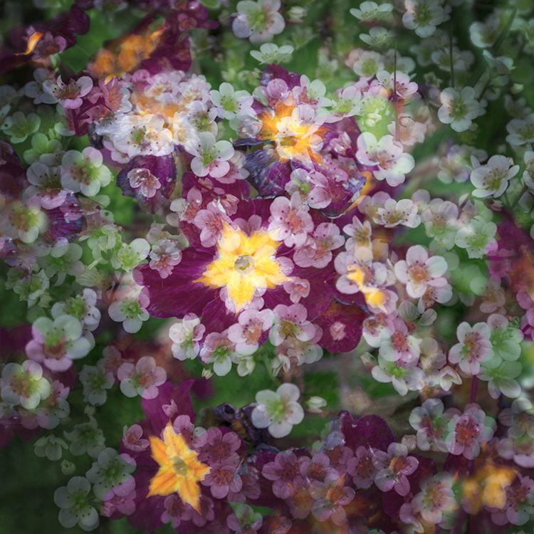 Multi Flowers 02