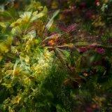 Multi Flowers 03