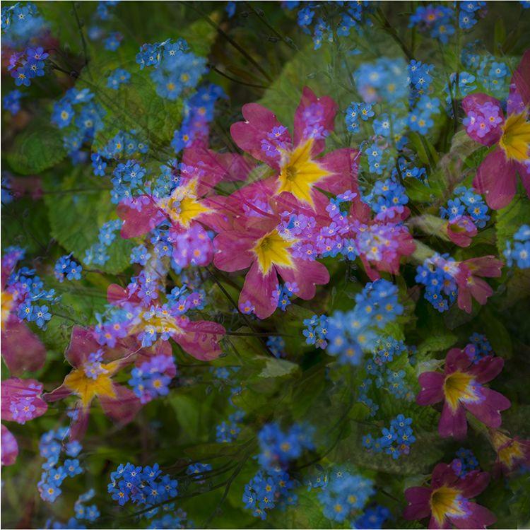 Multi Flowers 04