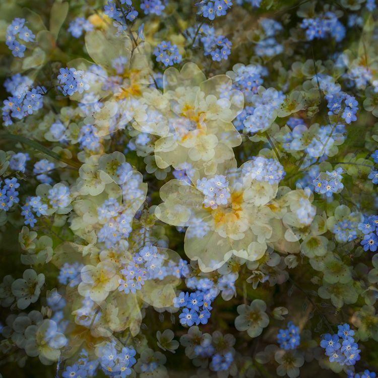 Multi Flowers 05