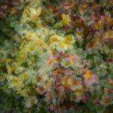 Multi Flowers 06