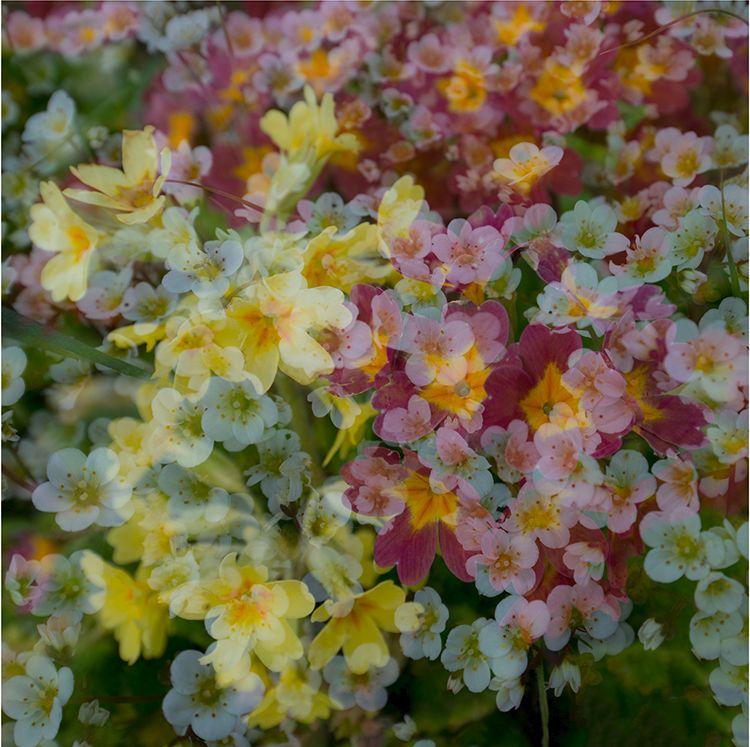 Multi Flowers 07