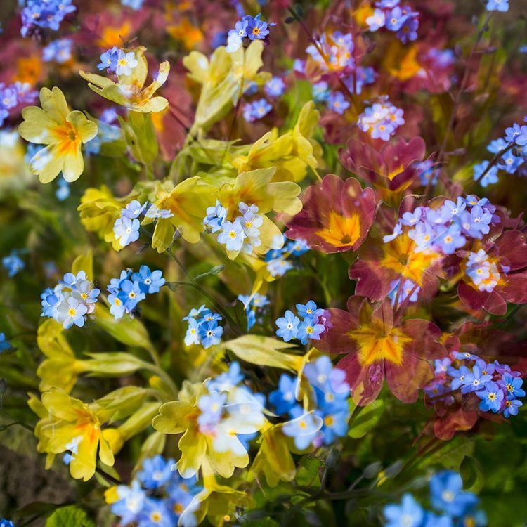 Multi Flowers 08
