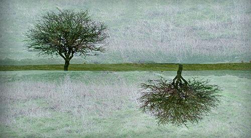 Penmon Tree