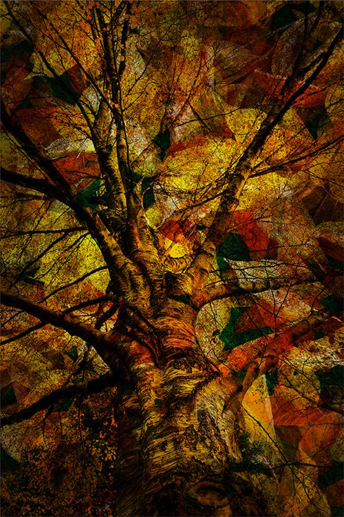 Plas Rhianfa Autumn 6