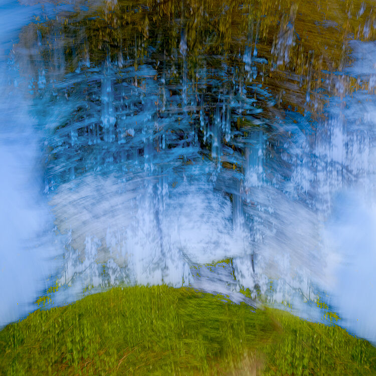Trees on Hill Llangoed
