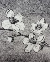 Blossom long