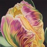 Pastel parrot tulip