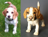 Benny beagle, Commission 2012