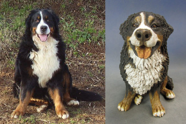 Bernese Mountain Dog, Commission 2012