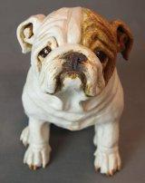 Bulldog 2014