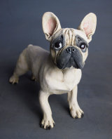 French Bulldog (my first!), 2015