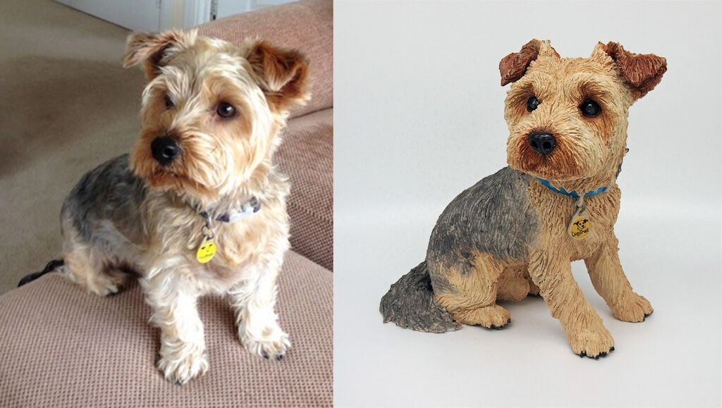 Ollie Yorkshire Terrier, Commission 2020