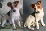 Peggy, Jack Russell Commission 2012