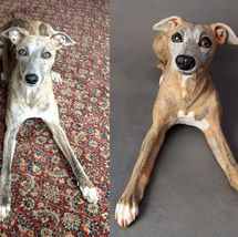 Pippa Whippet, Commission 2016