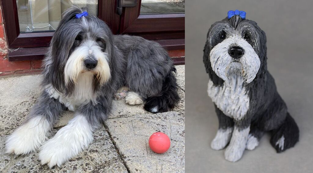 Rory Bearded Collie, commission 2020