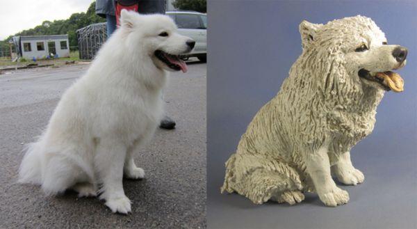 Coco, Samoyed Commission 2011