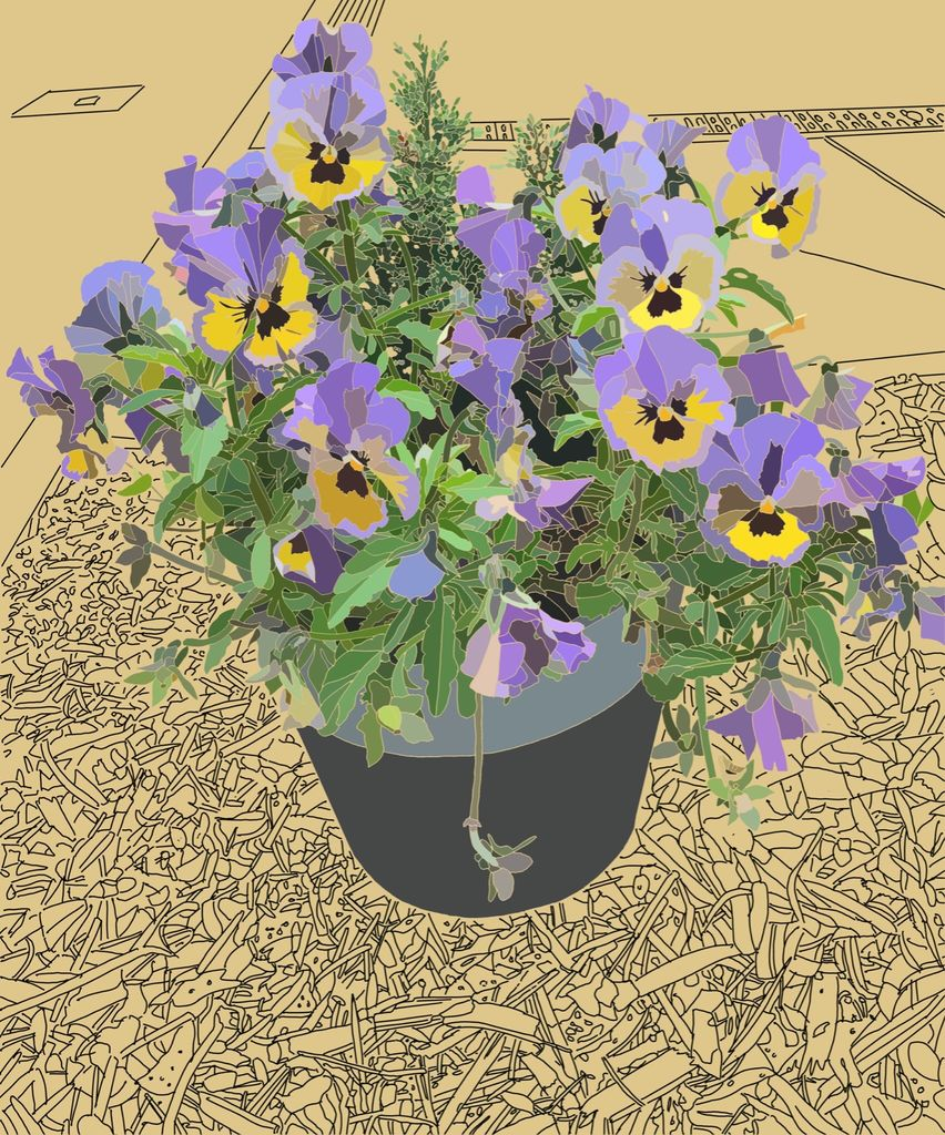 Potted Pansies 2