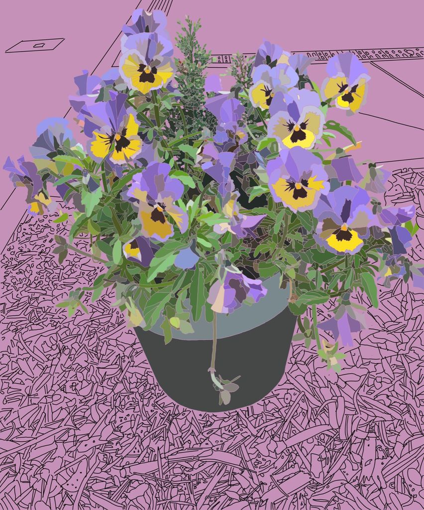 Potted Pansies 3
