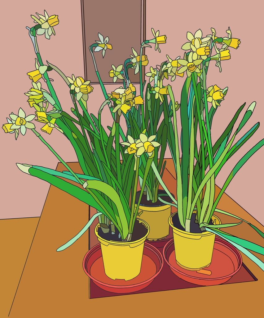 Jordan's Daffodils