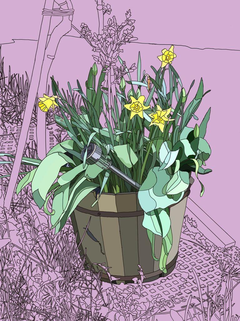 Tub Of Daffodils