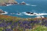 Bluebells and Blue Sea
