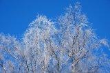 Frostbound