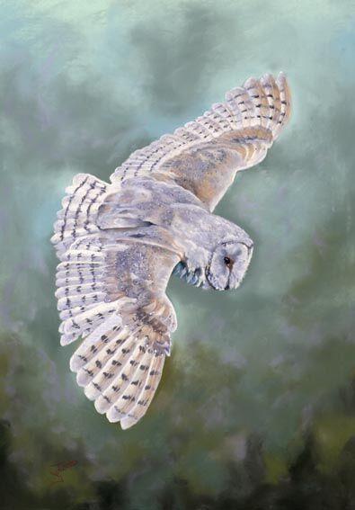 Barn Owl in Flight 3