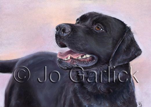 Chief (Black Labrador)