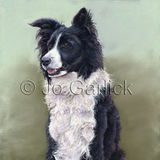 Jess (Collie/ Sheepdog)