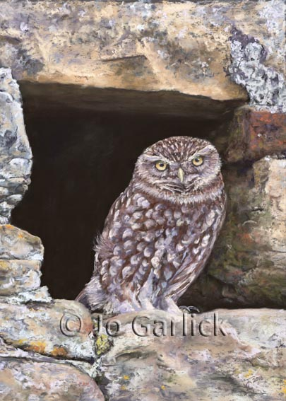 Pastel painting of a little owl in a Yorkshire barn