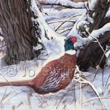 Pheasant in Snow