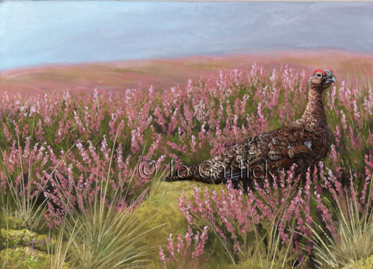Pastel painting of a red grouse in heather