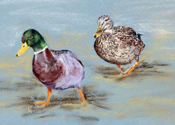 Waddling Ducks