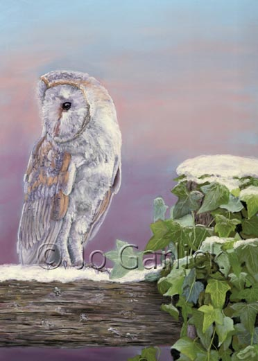Winter Barn Owl