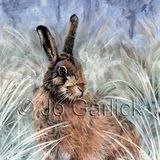 Winter Hare (greeting card)